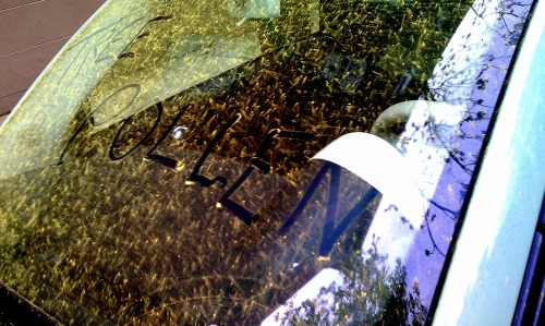 tree pollen windshield