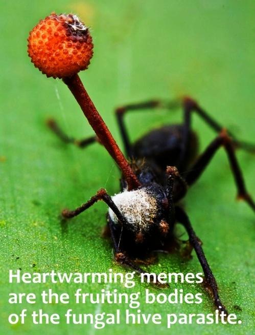heartwarming fruiting meme ort sat