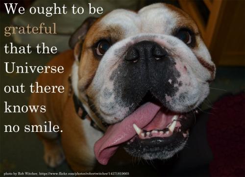 herzog universe no smile