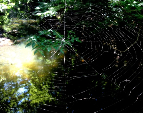 spider web beargrass creek twk1