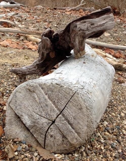 driftwood copulation