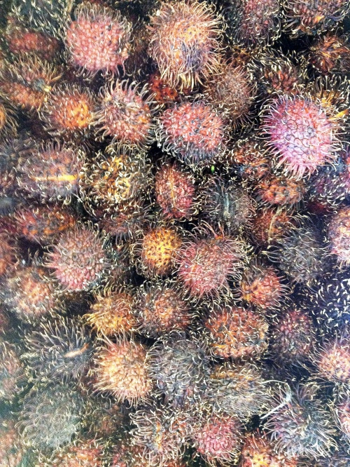 urchin fruit hdr ort twk