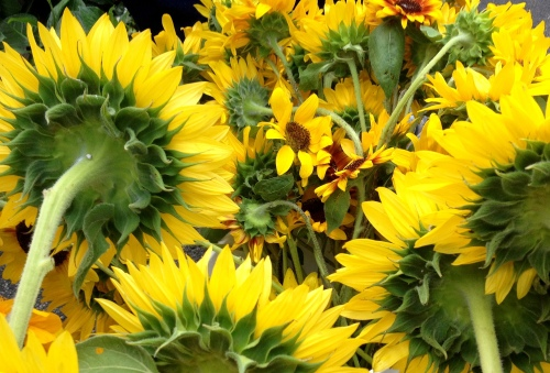 fmarket sunflowers back
