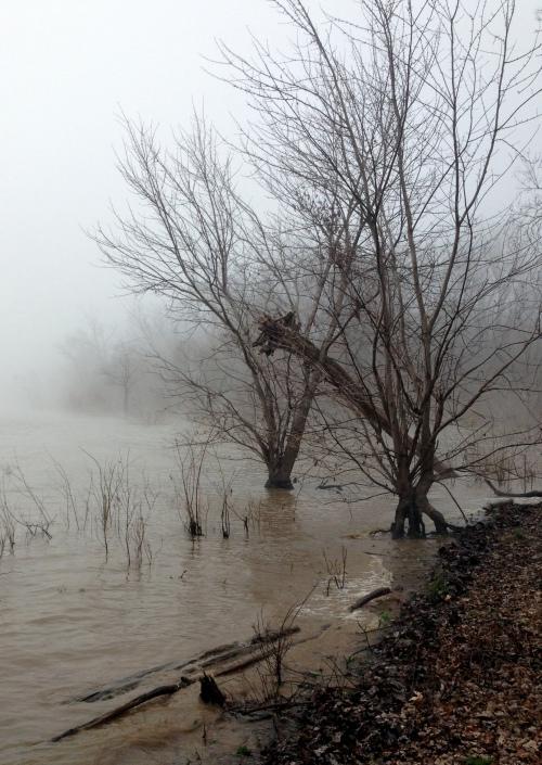 falls o foggy shore