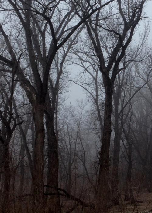 falls o trees fog 1 crop 2 twk
