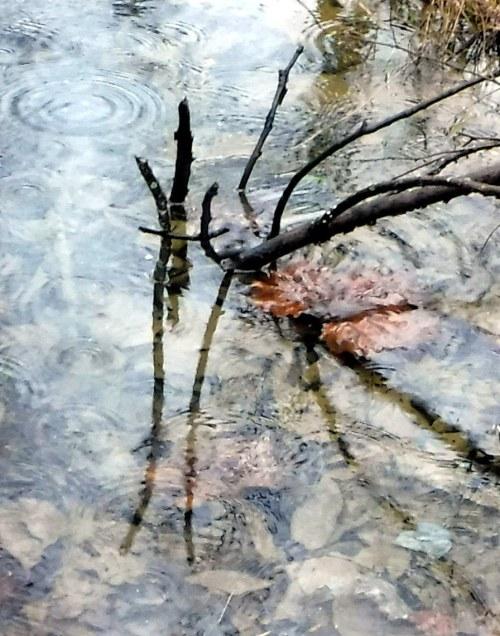 trespass park sticks puddle