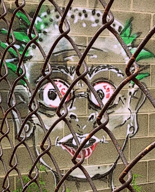 graf face behind chainlink