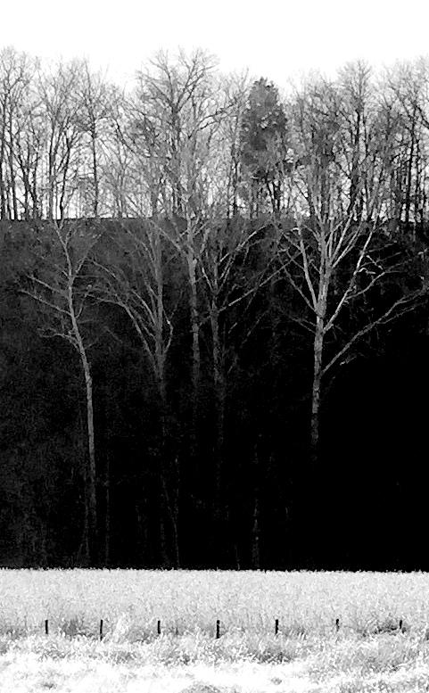 trees against hill bw floyd forks 3