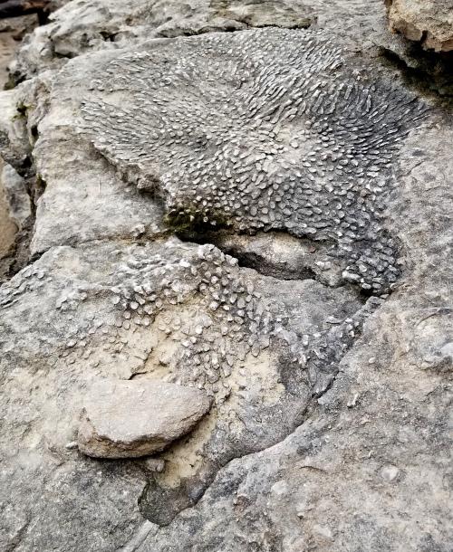 falls o fossil face