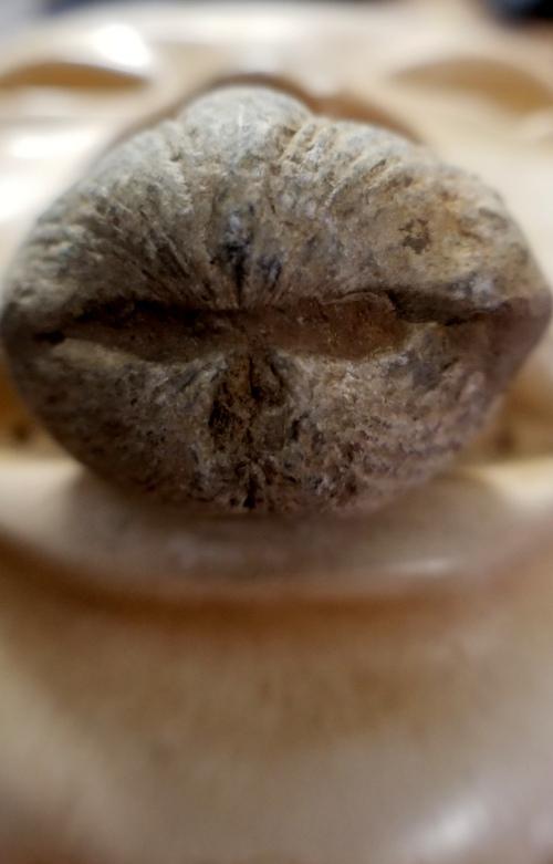 olmec brachiopod kiss