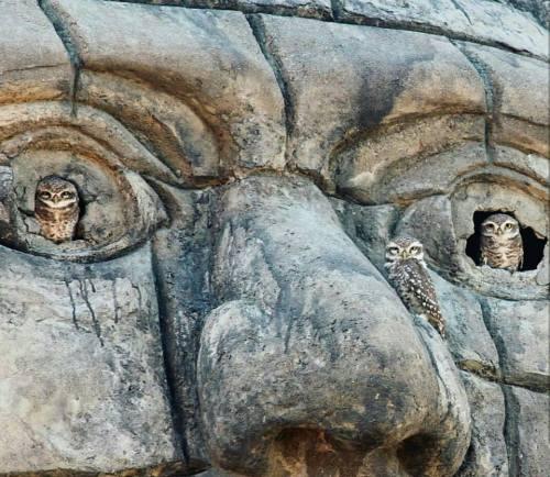 stone face owl eyes