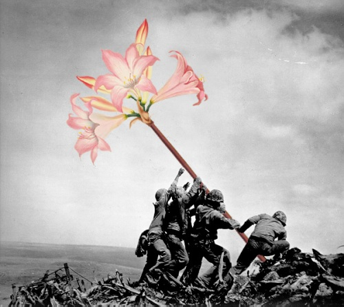 iwo jima flower war mr blick