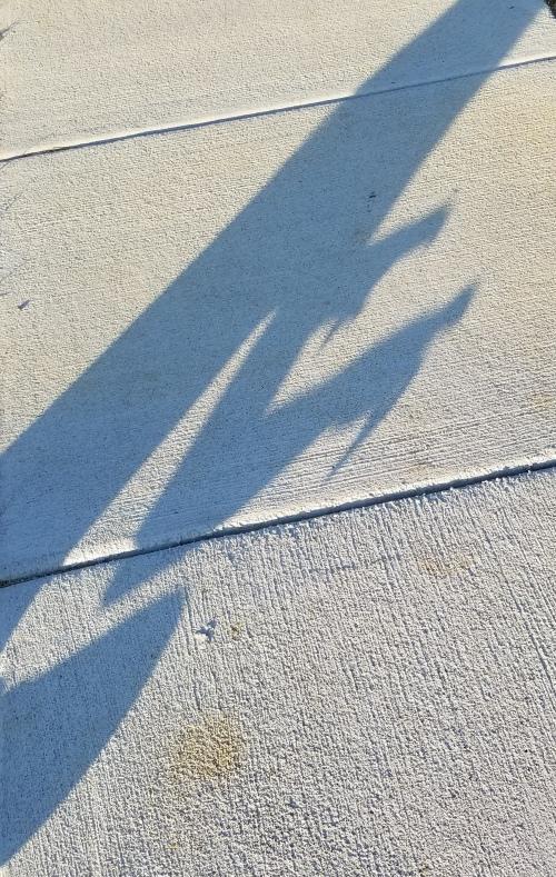 eden shadow puppets 3