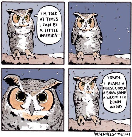 intimidating owl